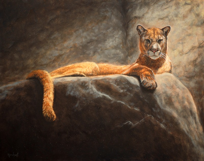 Laying Cougar, Oil, 2010.