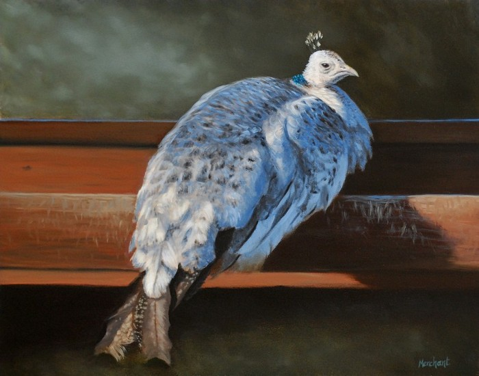 Rustic Elegance - White Peahen, Oil on Panel, by Linda Merchant, 2012.